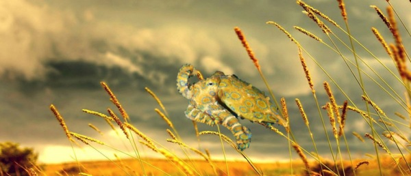 Photoshopped image of of a blue-ringed octopus flying over a field. Image created by Trish Weaver using source images from http://wall.alphacoders.com/big.php?i=42785 and http://animal-backgrounds.com/octopus/octopus-hd-wallpaper-2.html Please note that octopuses do not actually fly. This is just one of my flights of fancy