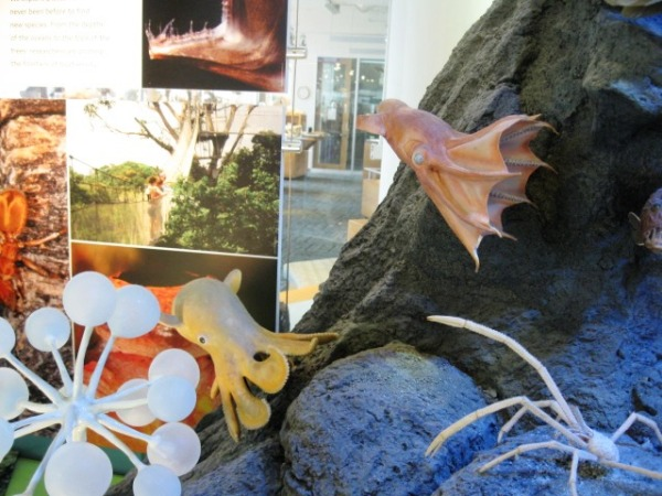 Phot of models of a vampire squid (red, upper right) and a dumbo octopus (yellowish-brown, lower left) in the Biodiversity wall diorama. Photo by Trish Weaver