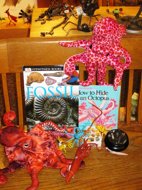 Photo of cephalopods in the Museum store. In this photo there are two books, 1 blackish jar, two reddish octopuses, some yellow and some red squid. How many do you see? Photo by Trish Weaver